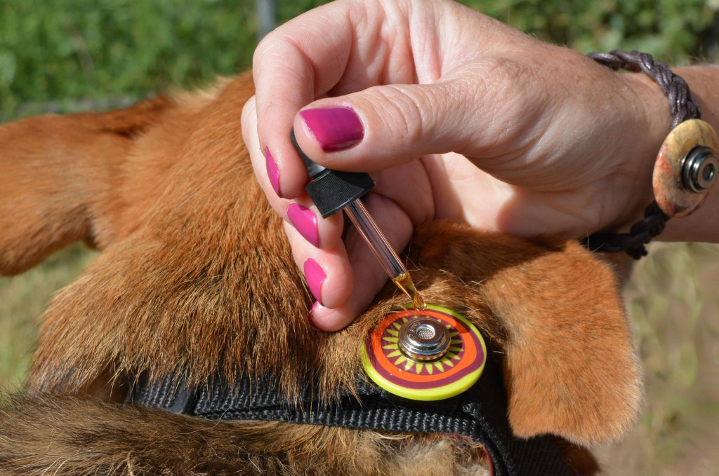 adding Daisy's blend to Collar Companion®